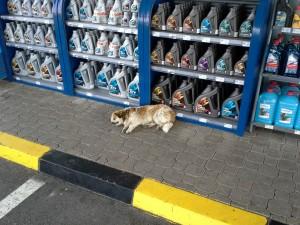 Potepuški pes na oddihu