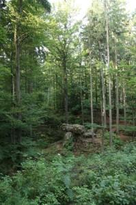 Sredi čarobnega gozda