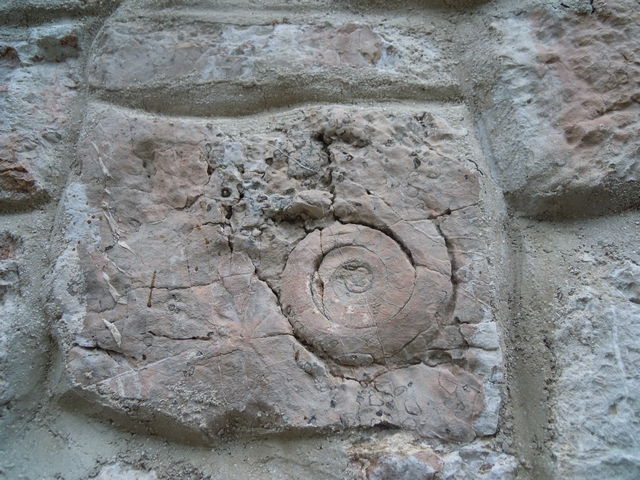 Fosil amonita na steni Koče pri dvojnem jezeru