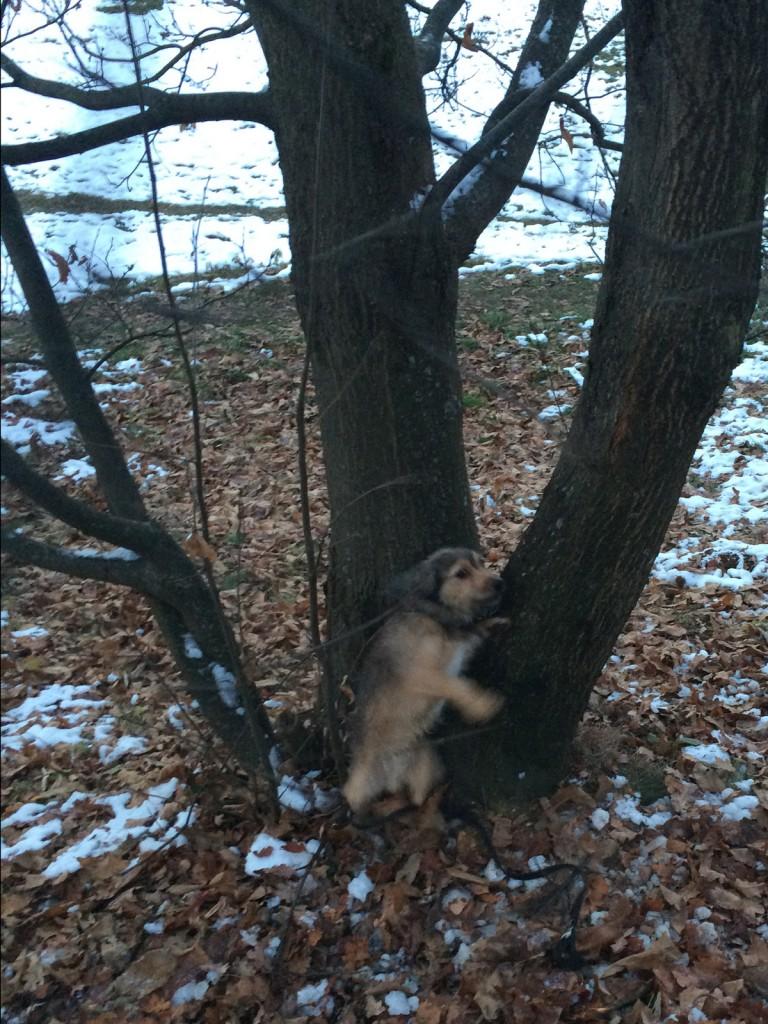Priletel sem tudi v drevo
