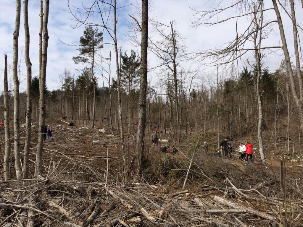 Geolovci so s CITO dogodkom sodelovali tudi v akciji pogozdovanja.