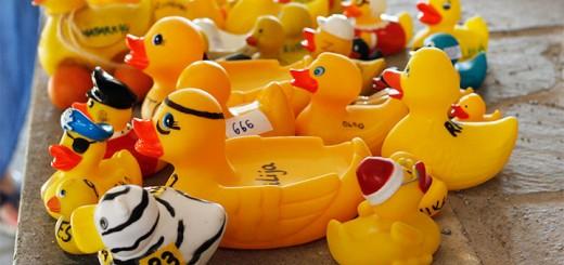 duck_lead