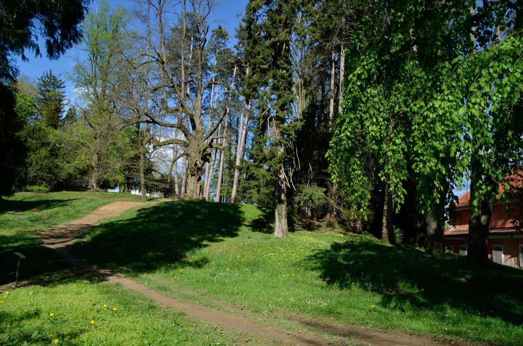 Mogočna drevesa so poleg graščine (in zaklada) največja znamenitost parka.