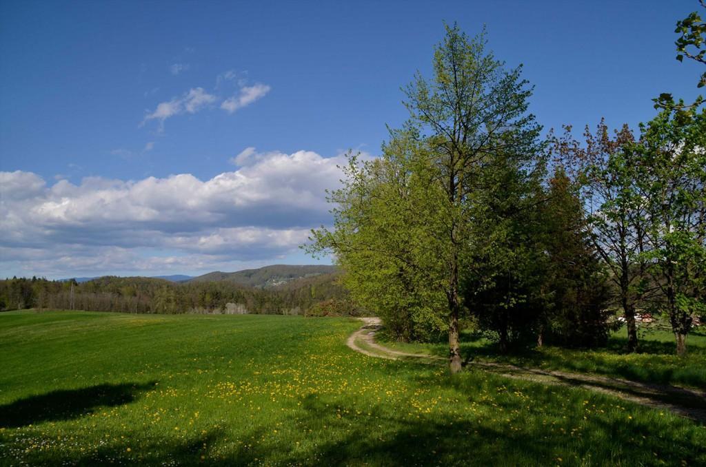 Pomlad je še daleč, zaklad pa lahko obiščete že danes.