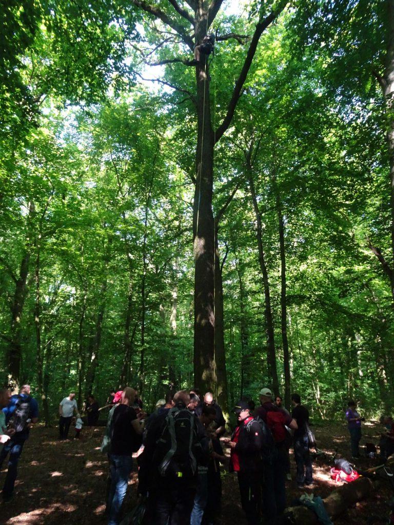 T5 kešek z revežem na vrhu drevesa